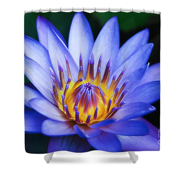 Tropical Dreams Shower Curtain by Sharon Mau