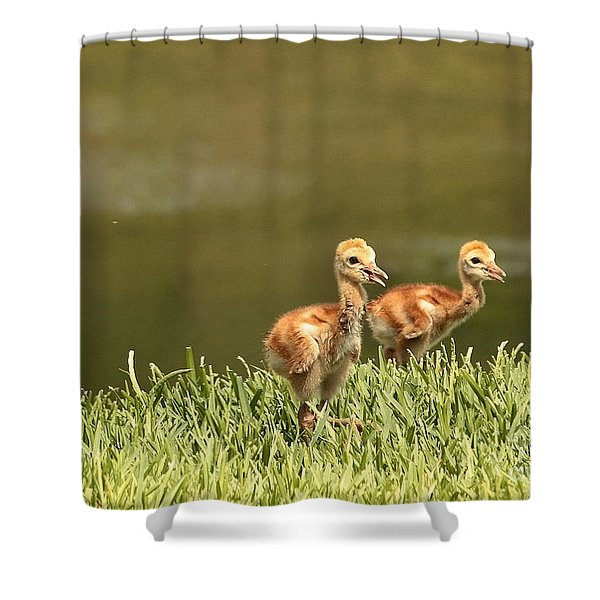 Two Chicks Shower Curtain by Carol Groenen