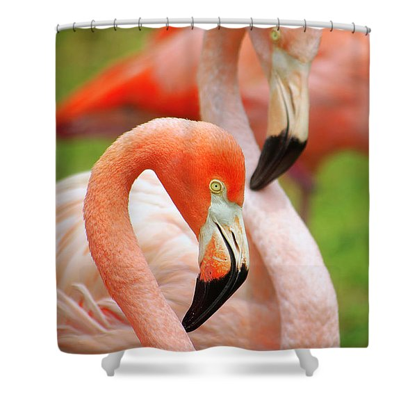 Two Flamingoes Shower Curtain by Carlos Caetano