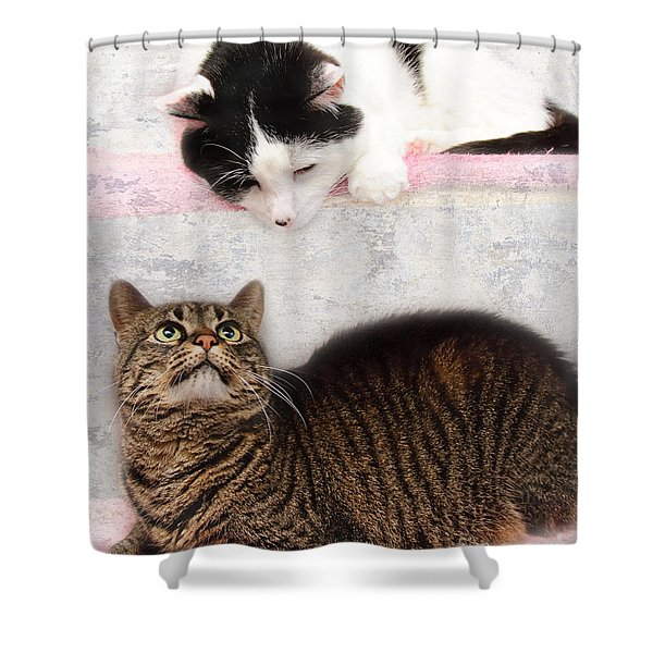 Upstairs Downstairs With Emmy And Pepper Shower Curtain by Andee Design