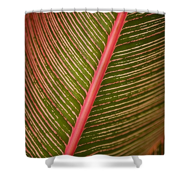 Variegated Ti-Leaf 2 Shower Curtain by Ron Dahlquist - Printscapes