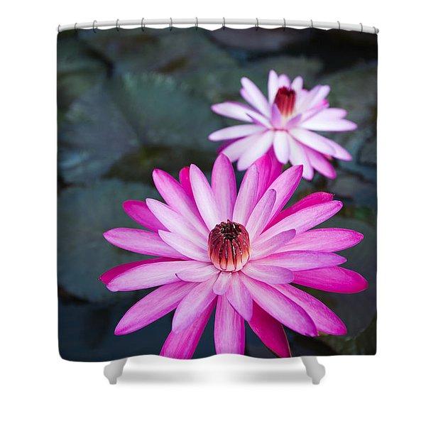 Vibrant Waterlilies Shower Curtain by Dana Edmunds - Printscapes