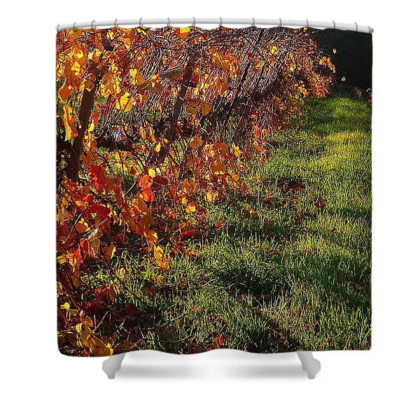 Vineyard 13 Shower Curtain by Xueling Zou