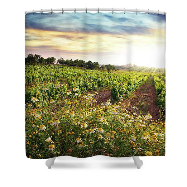 Vineyard Shower Curtain by Carlos Caetano