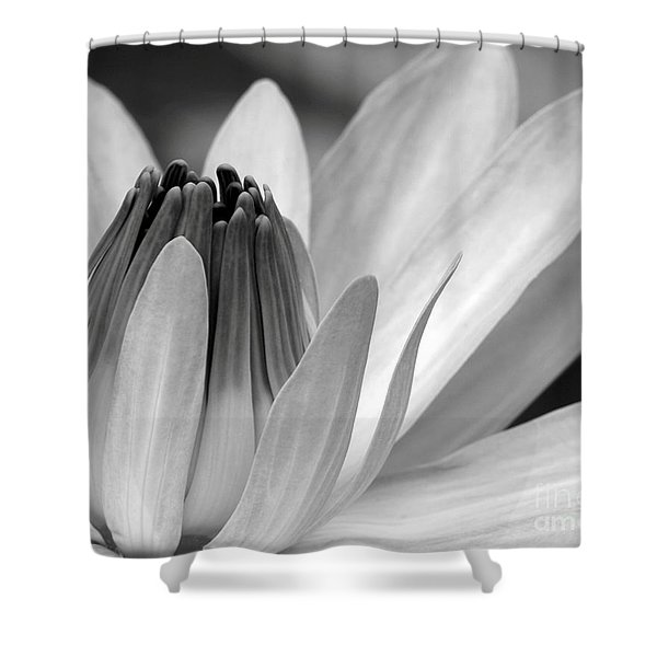 Water Lily Opening Shower Curtain by Sabrina L Ryan