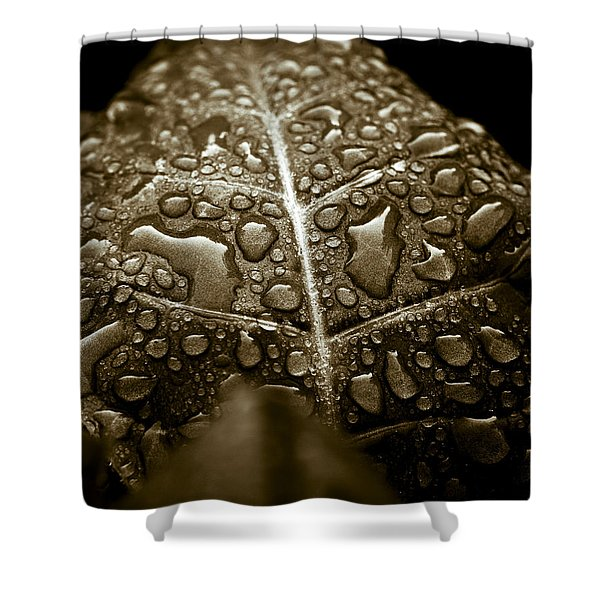 - Wet Havana Tobacco Leaf Shower Curtain by Frank Tschakert