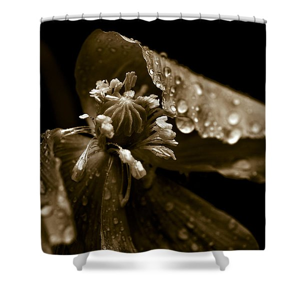 - Wet Opium Poppy Shower Curtain by Frank Tschakert