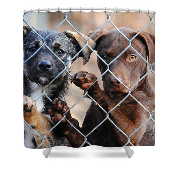 What About Us Shower Curtain by Jai Johnson