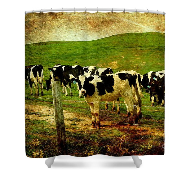 When The Cows Come Home . Photoart Shower Curtain by Wingsdomain Art and Photography
