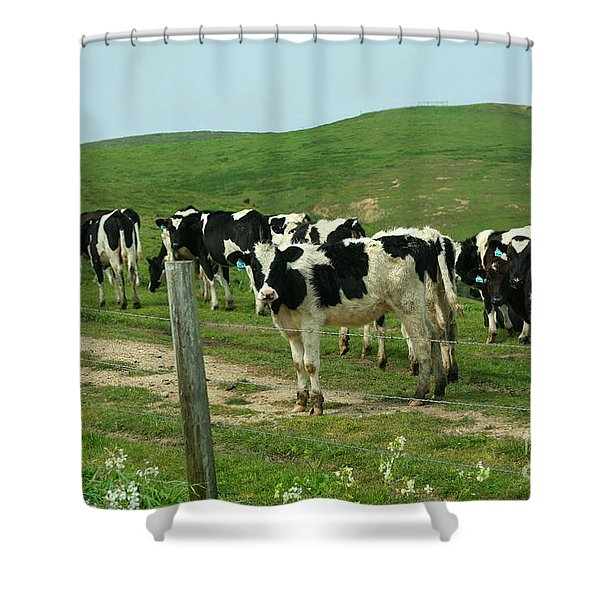 When the Cows Come Home Shower Curtain by Wingsdomain Art and Photography