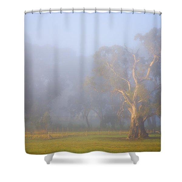 White Gum Morning Shower Curtain by Mike  Dawson