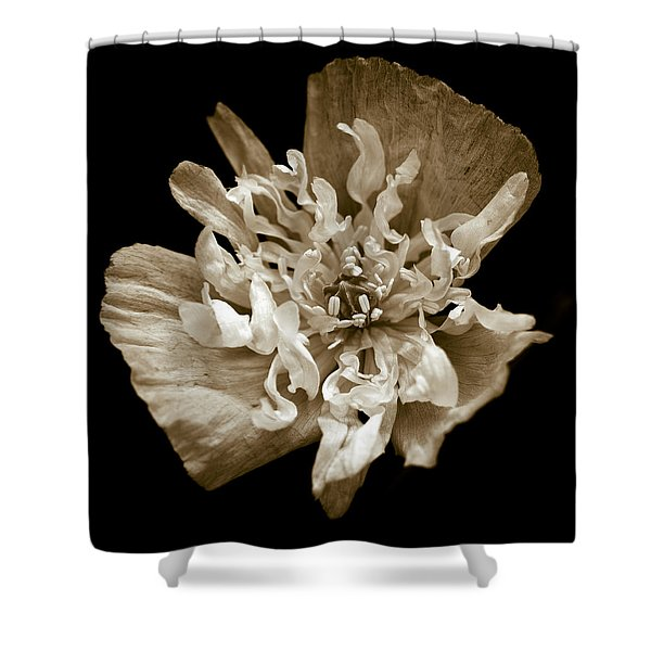 - White Peony Flowered Opium Poppy Shower Curtain by Frank Tschakert