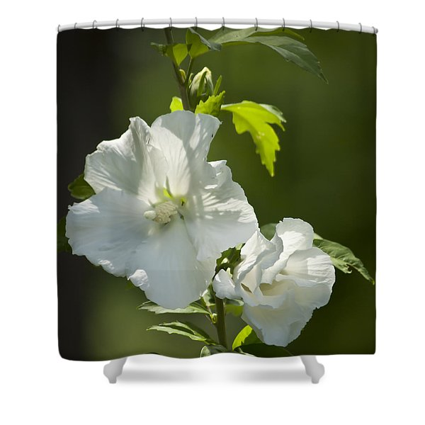 White Rose of Sharon Squared Shower Curtain by Teresa Mucha