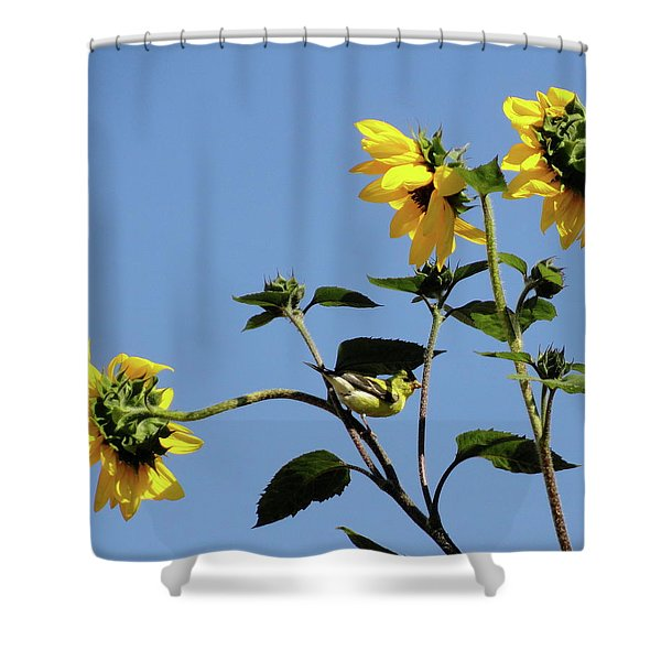 Wild Canary Sunflowers Shower Curtain by Shannon Grissom