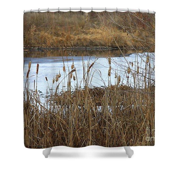 Winter Cattails Shower Curtain by Carol Groenen