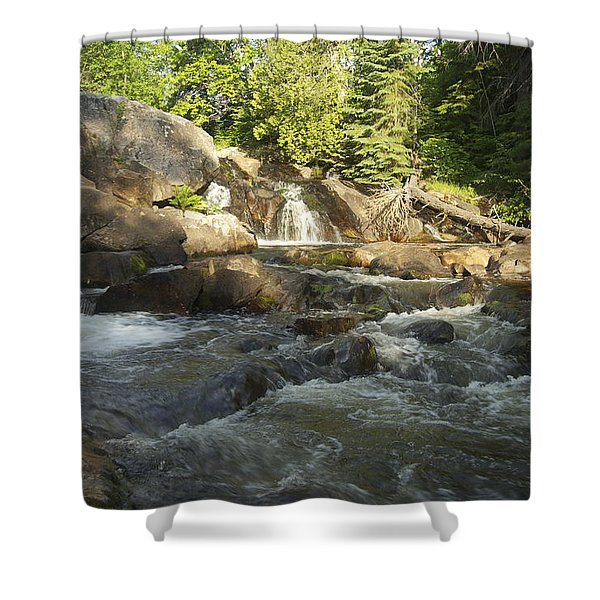 Yellow Dog 1 Shower Curtain by Michael Peychich