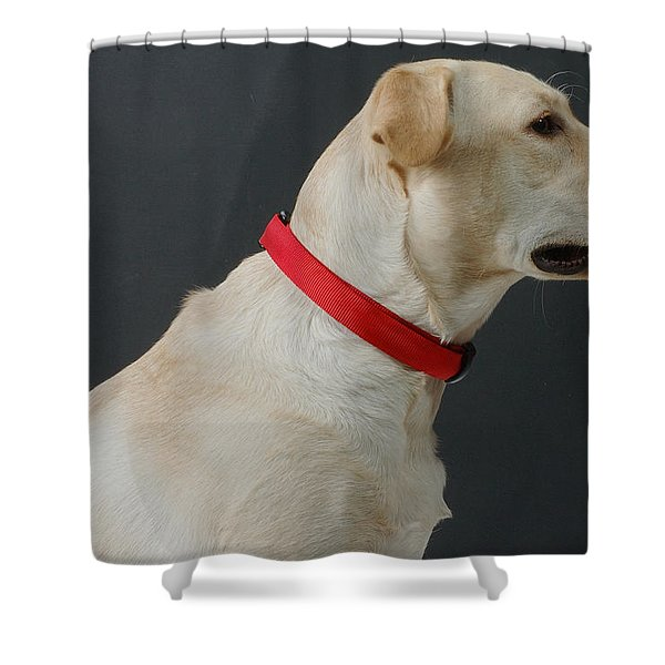 Yellow Lab Shower Curtain by Jerry McElroy
