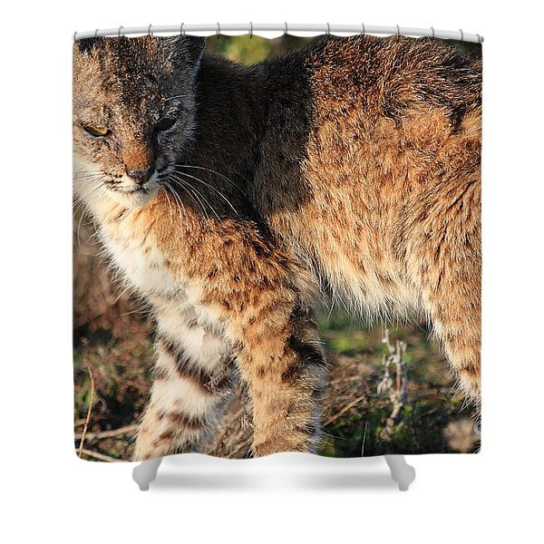 Young Bobcat 01 Shower Curtain by Wingsdomain Art and Photography