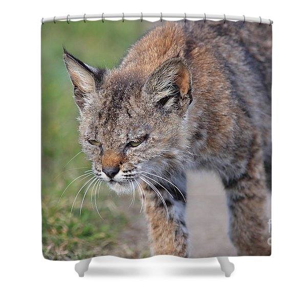 Young Bobcat 03 Shower Curtain by Wingsdomain Art and Photography