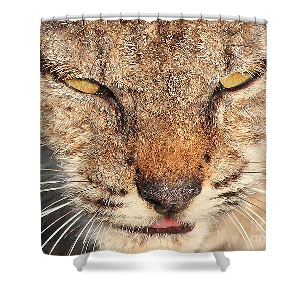 Young Bobcat Portrait 01 Shower Curtain by Wingsdomain Art and Photography