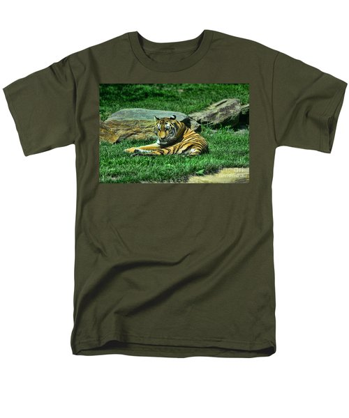 A Tiger's Gaze T-Shirt by Paul Ward