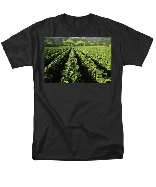 Agriculture - Mid Growth Cauliflower Men's T-Shirt  (Regular Fit) by Ed Young