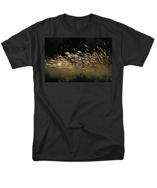 Blades Of Grass In The Sunlight T-Shirt by Jim Holmes