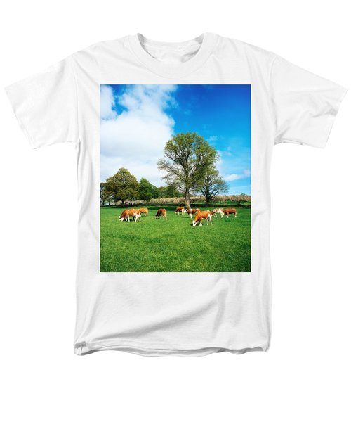 Hereford Bullocks T-Shirt by The Irish Image Collection