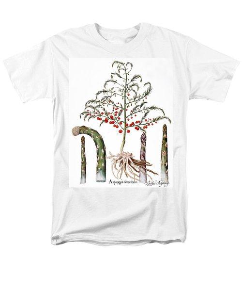 Botany: Asparagus, 1613 Men's T-Shirt  (Regular Fit) by Granger
