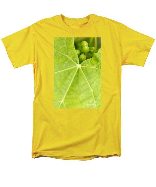 Maturing wine grapes T-Shirt by Gaspar Avila
