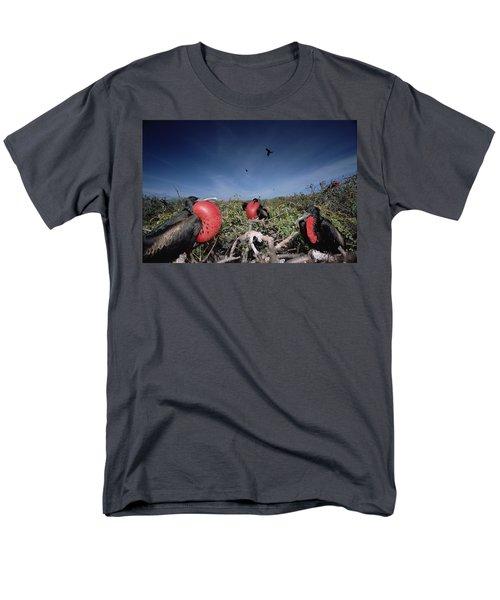 Great Frigatebird Males In Courtship T-Shirt by Tui De Roy