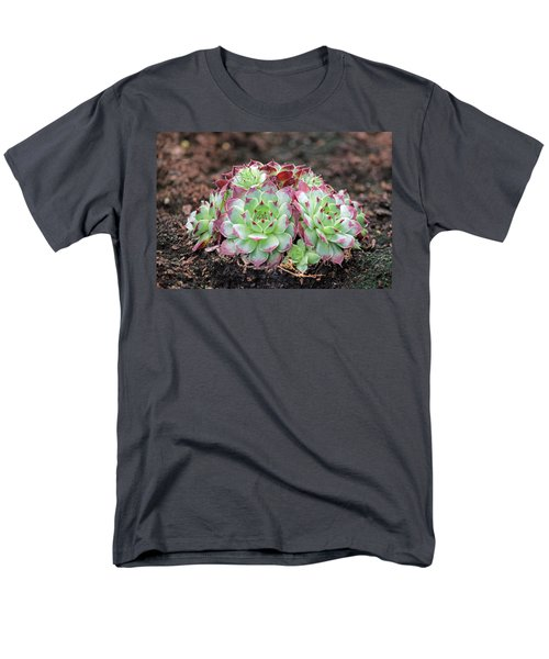 Hen and Chicks T-Shirt by Tony Murtagh