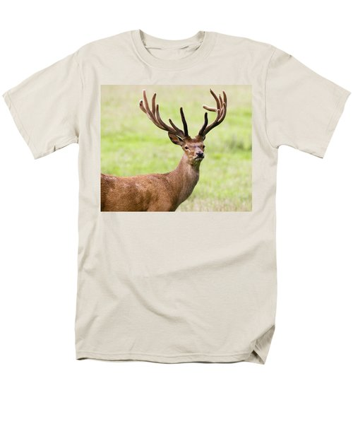 Deer With Antlers, Harrogate T-Shirt by John Short