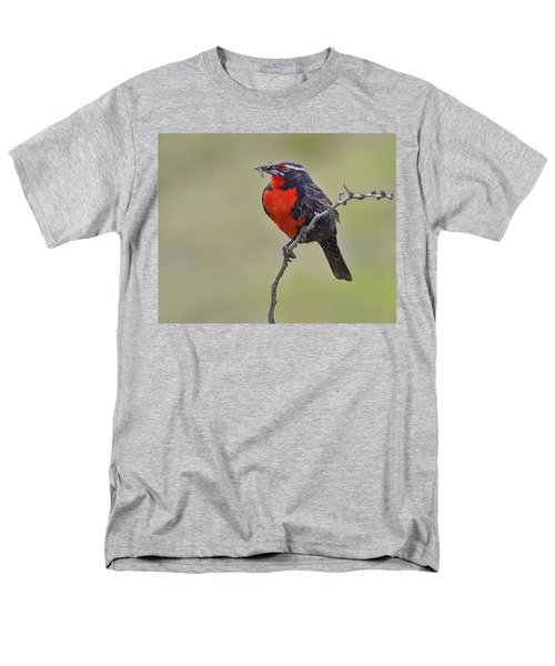 Long-tailed Meadowlark Men's T-Shirt  (Regular Fit) by Tony Beck