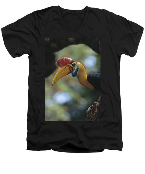 Sulawesi Red-knobbed Hornbill Male Men's V-Neck T-Shirt by Tui De Roy
