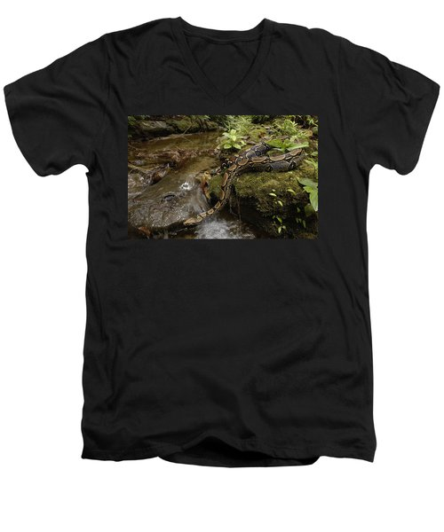 Boa Constrictor Crossing Stream Men's V-Neck T-Shirt by Pete Oxford