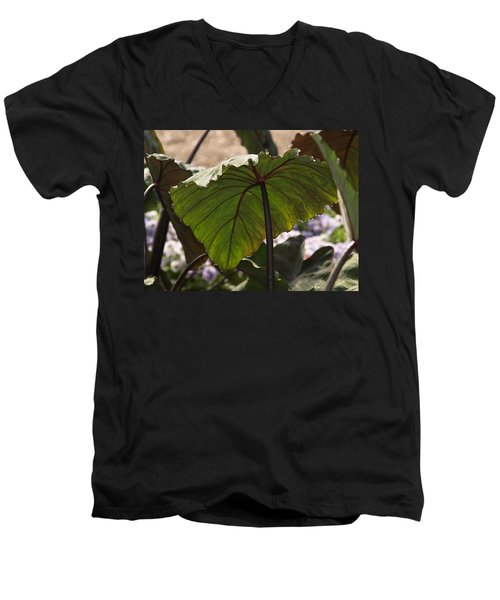 Elephant Ear Men's V-Neck T-Shirt by James Peterson