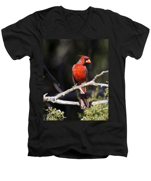 Male Northern Cardinal Men's V-Neck T-Shirt by Gary Langley