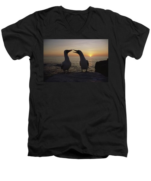 Masked Booby Couple Courting Galapagos Men's V-Neck T-Shirt by Konrad Wothe