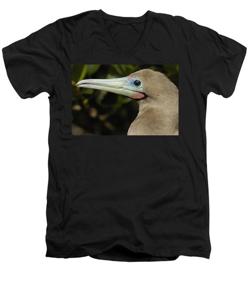 Red-footed Booby Close Up Galapagos Men's V-Neck T-Shirt by Pete Oxford
