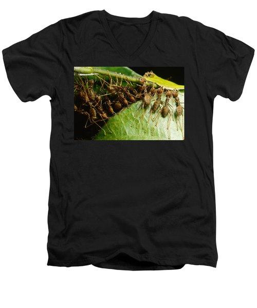 Weaver Ant Group Binding Leaves Men's V-Neck T-Shirt by Mark Moffett