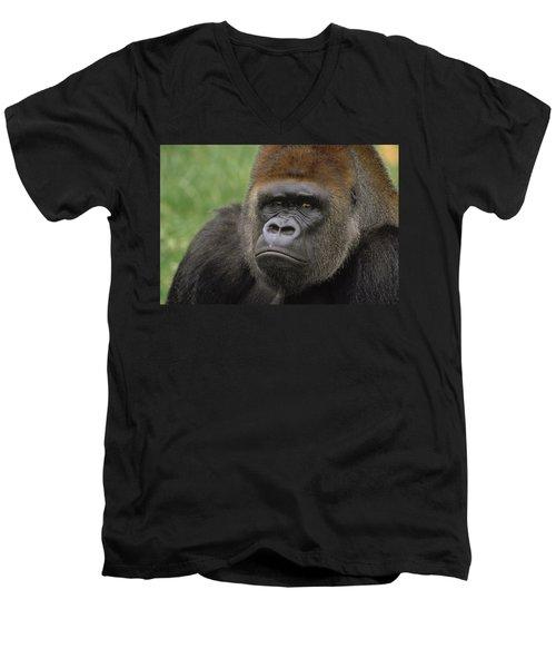 Western Lowland Gorilla Silverback Men's V-Neck T-Shirt by Gerry Ellis