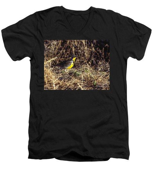 Western Meadowlark Men's V-Neck T-Shirt by Steven Ralser
