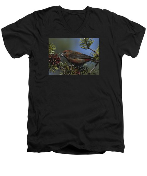 Red Crossbill Feeds On Pine Cone Seeds Men's V-Neck T-Shirt by Mark Wallner
