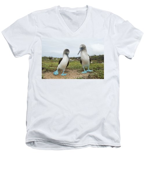 Blue-footed Booby Pair Courting Men's V-Neck T-Shirt by Tui De Roy