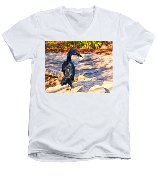 Abyssinian Ground Hornbill Men's V-Neck T-Shirt by Chris Flees