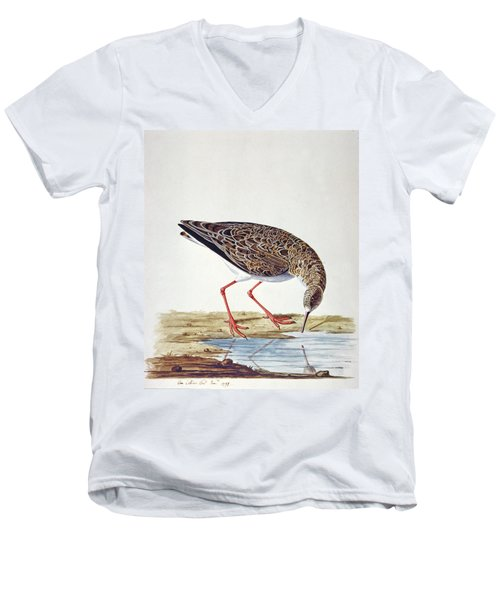 Curlew Sandpiper Men's V-Neck T-Shirt by Charles Collins