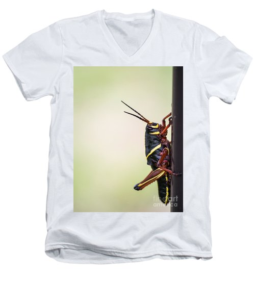 Giant Eastern Lubber Grasshopper Men's V-Neck T-Shirt by Edward Fielding