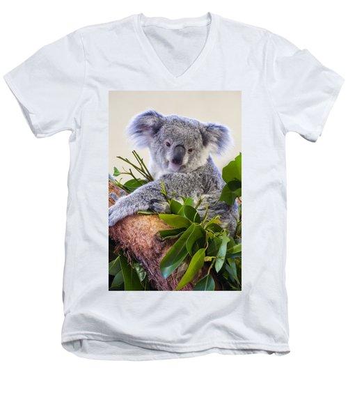 Koala On Top Of A Tree Men's V-Neck T-Shirt by Chris Flees