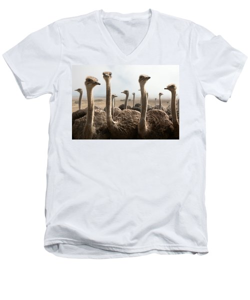 Ostrich Heads Men's V-Neck T-Shirt by Johan Swanepoel